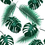 Tropical palm leaves. Jungle thickets. Seamless floral wallpaper background. illustration Royalty Free Stock Photography
