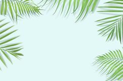 Tropical palm leaves on light blue background. Minimal nature. S. Ummer Styled.  Flat lay.  Image is approximately 5500 x 3600 pixels in size Royalty Free Stock Photography