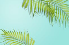 Tropical palm leaves on light blue background. Minimal nature. S. Ummer Styled.  Flat lay.  Image is approximately 5500 x 3600 pixels in size Stock Images
