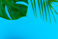 Tropical palm leaves and Monstera flower on a blue background. Creative layout of these tropical leaves on a blue background. Summ royalty free stock photography