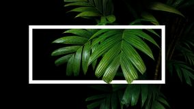 Tropical palm leaves nature frame layout, rainforest foliage plant trees on black background with white frame border. stock image