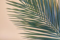 Tropical palm leaves on pastel background. royalty free stock images