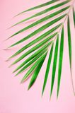 Tropical palm leaves on pastel pink background. Minimal summer concept. Creative flat lay with copy space. Top view stock photography