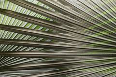 Tropical Palm Leaves Pattern stock photos