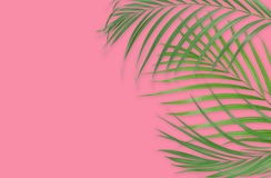 Tropical palm leaves on pink background. Minimal nature. Summer Stock Photo