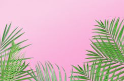 Tropical palm leaves on pink background. Minimal nature. Summer. Styled.  Flat lay.  Image is approximately 5500 x 3600 pixels in size Stock Image
