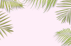 Tropical palm leaves on pink background. Minimal nature. Summer. Styled.  Flat lay.  Image is approximately 5500 x 3600 pixels in size Royalty Free Stock Images