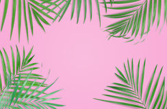 Tropical palm leaves on pink background. Minimal nature. Summer. Styled. Flat lay. Image is approximately 5500 x 3600 pixels in size royalty free stock photos