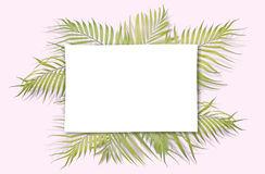 Tropical palm leaves on pink background. Minimal nature. Summer Royalty Free Stock Photography