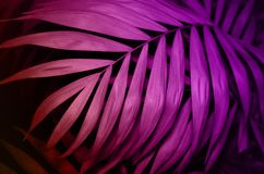 Tropical palm leaves pink texture background. Nature concept. stock photos