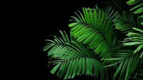 Tropical palm leaves, rainforest foliage nature plant bush on bl stock photos