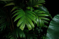 Tropical palm leaves and rainforest foliage plants bush growing stock photos