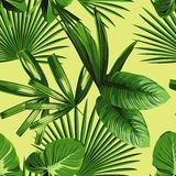 Tropical palm leaves seamless background Royalty Free Stock Images