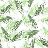 Tropical palm leaves seamless pattern. . Floral vector background. Stock Image