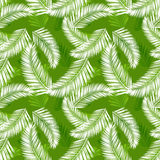 Tropical palm leaves seamless vector pattern Stock Image