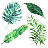 Tropical palm leaves set. Set of watercolor botanical illustration of tropical palm leaves stock illustration