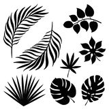 Tropical palm leaves silhouette set isolated on white background. Vector stock illustration