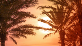 Tropical Palm Leaves. Tropical Palm Tree Leaves with Sun, Horizontal Royalty Free Stock Photos