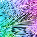 Tropical palm leaves in vibrant gradient neon colors. Minimal summer background stock photo