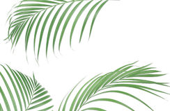 Tropical palm leaves on white background. Minimal nature. Summer Stock Photos