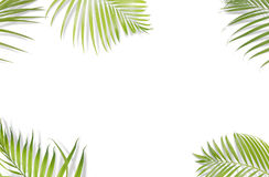 Tropical palm leaves on white background. Minimal nature. Summer Royalty Free Stock Image