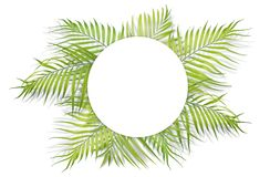 Tropical palm leaves with white paper on white background. Minim Royalty Free Stock Image