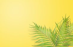 Tropical palm leaves on yellow background. Minimal nature. Summe. R Styled.  Flat lay.  Image is approximately 5500 x 3600 pixels in size Royalty Free Stock Photos