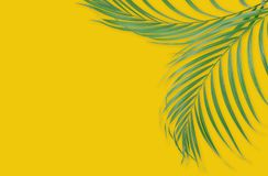 Tropical palm leaves on yellow background. Minimal nature. Summe. R Styled.  Flat lay.  Image is approximately 5500 x 3600 pixels in size Stock Image