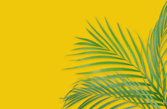 Tropical palm leaves on yellow background. Minimal nature. Summe. R Styled.  Flat lay.  Image is approximately 5500 x 3600 pixels in size Royalty Free Stock Photo
