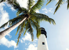 Tropical palm and lighthouse Stock Photo