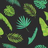 Tropical palm, monstera, chamaedorea leaves seamless pattern background Stock Photography