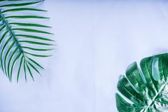 Tropical palm and monstera leaves background royalty free stock photos