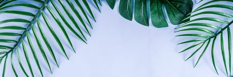 Tropical palm and monstera leaves background stock photography