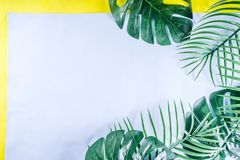 Tropical palm and monstera leaves background stock photos