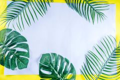 Tropical palm and monstera leaves background royalty free stock photography