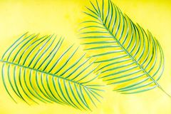 Tropical palm and monstera leaves background stock image