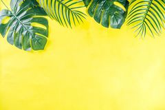 Tropical palm and monstera leaves background stock photo