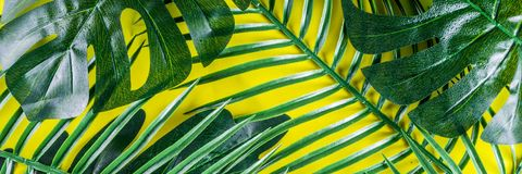 Tropical palm and monstera leaves background royalty free stock image