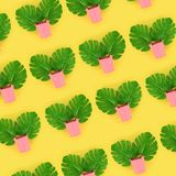 Tropical palm monstera leaves lies in a pastel pails on a colored background. Flat lay trendy minimal pattern. Top view.  royalty free stock photo