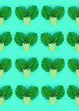 Tropical palm monstera leaves lies in a pastel pails on a colored background. Flat lay trendy minimal pattern. Top view.  stock photography