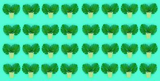 Tropical palm monstera leaves lies in a pastel pails on a colored background. Flat lay trendy minimal pattern. Top view.  royalty free stock image