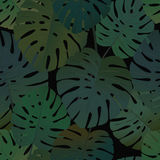 Tropical palm monstera leaves seamless pattern Stock Photos