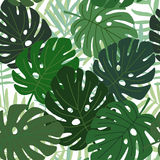 Tropical palm and monstera leaves seamless pattern, flat design,  illustration Stock Photo