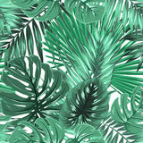 Tropical palm monstera leaves seamless pattern vector illustration