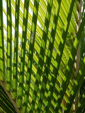 Tropical palm: nikau fronds. New Zealand native nikau palm fronds pattern royalty free stock photo
