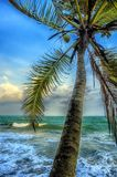 Tropical palm and ocean Stock Photography