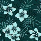 Tropical seamless floral hawaiian frangipani pattern stock illustration