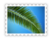 Tropical palm postage stamp Royalty Free Stock Images