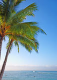 Tropical palm and sea Royalty Free Stock Photo