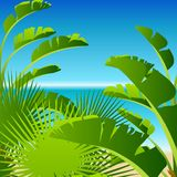 Tropical palm on sea background Stock Photos
